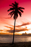 Black palm on night beach Stock Photography