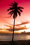 Black Palm On Night Beach Stock Photography