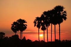 Black palm silhouette. Palm trees silhouette at sunset Thailand Royalty Free Stock Photography