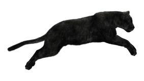 Free Black Panther Royalty Free Stock Photo - 52499265
