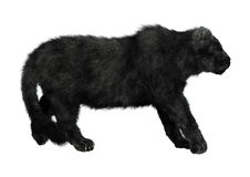 Black Panther. 3D digital render of a big cat black panther walking isolated on white background Stock Photo