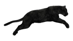 Black Panther. 3D digital render of a jumping black panther isolated on white background Royalty Free Stock Photo