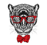 Black Panther in glasses and tie . Hipster. Stock Images