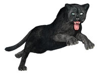 Black Panther hunting Royalty Free Stock Photography