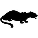 Black panther roars loudly Royalty Free Stock Images