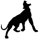 Black panther roars loudly Stock Photos
