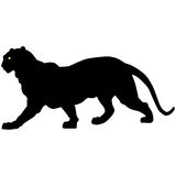 Black panther roars loudly Royalty Free Stock Photo