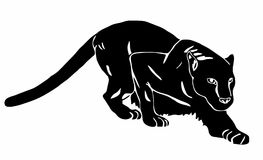 Black Panther sneaks. On white background Stock Image