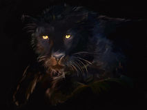 Black panthera Stock Photos
