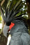 The black parrot in the zoo stock image