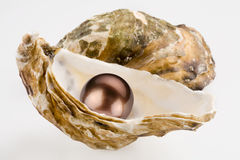 Black pearl. Is in a shell Stock Photography
