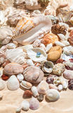 Black pearl lying underwater on seashell Royalty Free Stock Photography