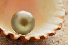 Black pearl. In shell closed up royalty free stock photo
