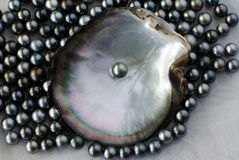 Black pearls Royalty Free Stock Photos