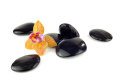Black pebbles with orchid Royalty Free Stock Images