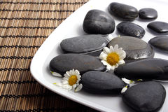 Black pebbles and white daisies in water Stock Photo