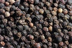 Black pepper stock photos