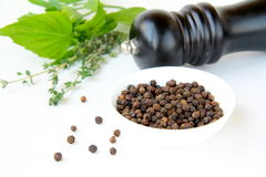 Black pepper in a bowl and herbs Royalty Free Stock Images