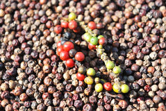 Black pepper Stock Images