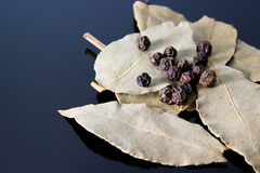 Black pepper and laurel Stock Images