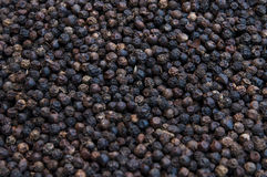 Black pepper peas Stock Photography