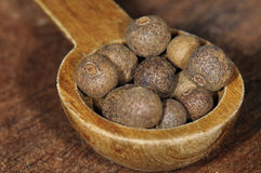 Black pepper (Piper nigrum) Stock Photos