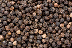 Black Pepper (Piper nigrum) Stock Images