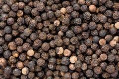 Black Pepper (Piper nigrum) Stock Images