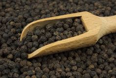 Black pepper scattered with a wooden scoop. Food ingredients: black pepper scattered with a wooden scoop royalty free stock image