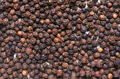 Black pepper texture Stock Image