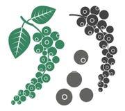 Black pepper. Vector illustration (EPS 10&#x29 Stock Photo