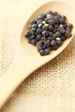 Black pepper in wooden spoon Royalty Free Stock Image