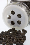 Black pepperconrs and shaker Stock Images