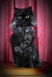 Black Persian cat posing on commode! Stock Images