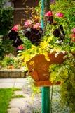 Black petunia in hanging basket. Black petunias in hanging basket in the home garden Stock Images