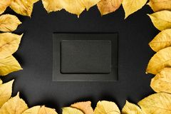 Black photo frame on a black background with autumn leaves of ye Royalty Free Stock Photos