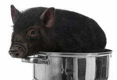 A black pig in a pot. White background royalty free stock image