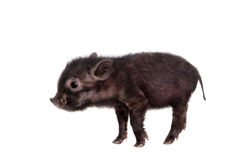 Black piggy isolated on white Royalty Free Stock Photo