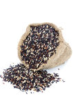 Black pile Rice in Gunny bag with white isolate background Royalty Free Stock Photos
