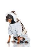 Black pincher dog Stock Image