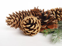Black pine cone Royalty Free Stock Images