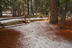 Black Pine Winter. Late winter forest scene at Black Pine Springs Campground near Sisters, OR stock images