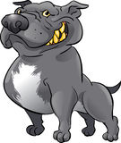Black pitbull Stock Photography