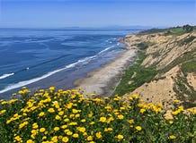 Black&#x27 ; plage de s avec des fleurs, San Diego photographie stock libre de droits
