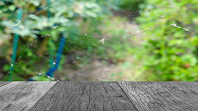 Black and with plank on cobweb with blur green plant Royalty Free Stock Photography