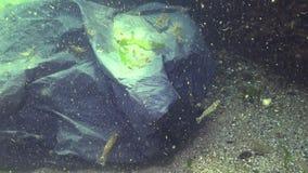 Black plastic bag in the sea, the killer of sea fish and animals. Plastic debris, environmental pollution, death of aquatic inhabitants. Black Sea, Ukraine stock video