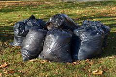 Black plastic bags with the fallen-down foliage lie on a grass Royalty Free Stock Images