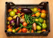 Black plastic box with fresh vegetables Stock Image