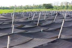 Black plastic mesh shade. Royalty Free Stock Photo