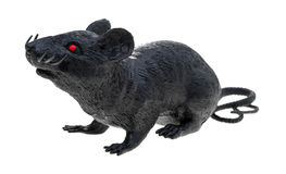 Black plastic toy rat on a white background Royalty Free Stock Images